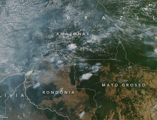 Brasil: ONG´s rechaçam acusação do presidente sobre as queimadas