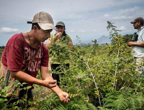 Defensa del agua, la vida y la paz: gestión comunitaria del agua en la subregión del Patía en Colombia
