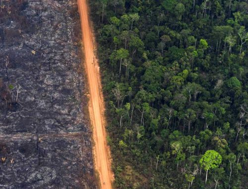 Es ahora: Fundación Avina se suma a la Declaración de Emergencia Climática.