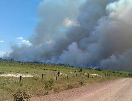 ¿Por qué se están quemando los bosques sudamericanos y qué hacer para cuidarlos?