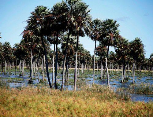 Paraguay: Consultoría para el desarrollo de nota de concepto en salud y cambio climático