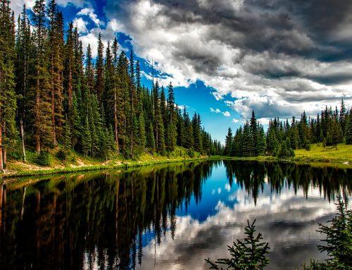 """""""E/também"""" ao invés de """"ou"""" – A necessidade de recuperar a natureza E reduzir emissões"""